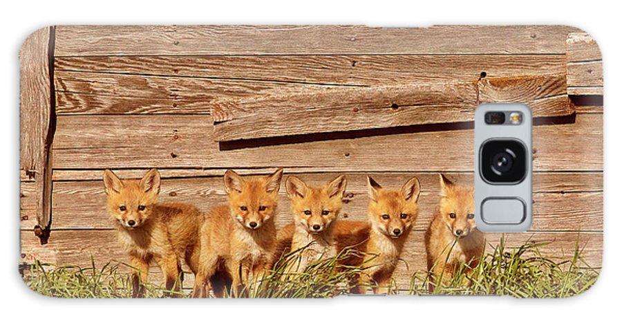 Red Fox Galaxy S8 Case featuring the digital art Five Fox Kits By Old Saskatchewan Granary by Mark Duffy