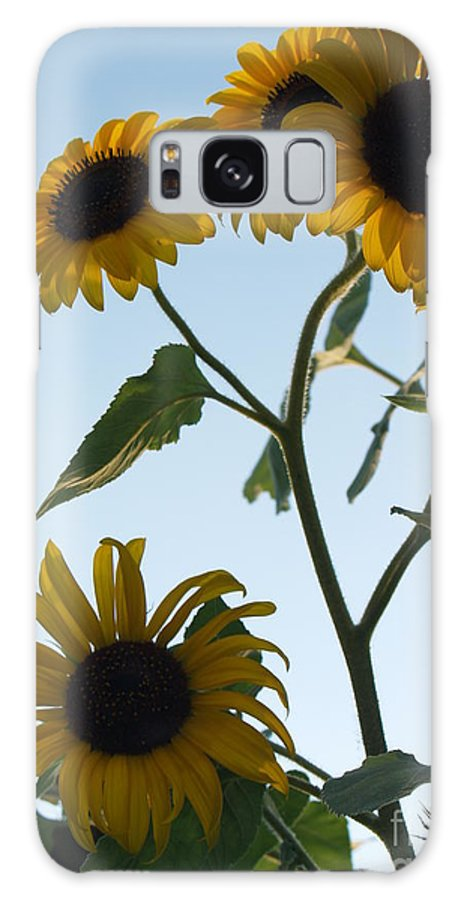Sunflower Galaxy S8 Case featuring the photograph Five Sunflowers To The Sky by Anna Lisa Yoder