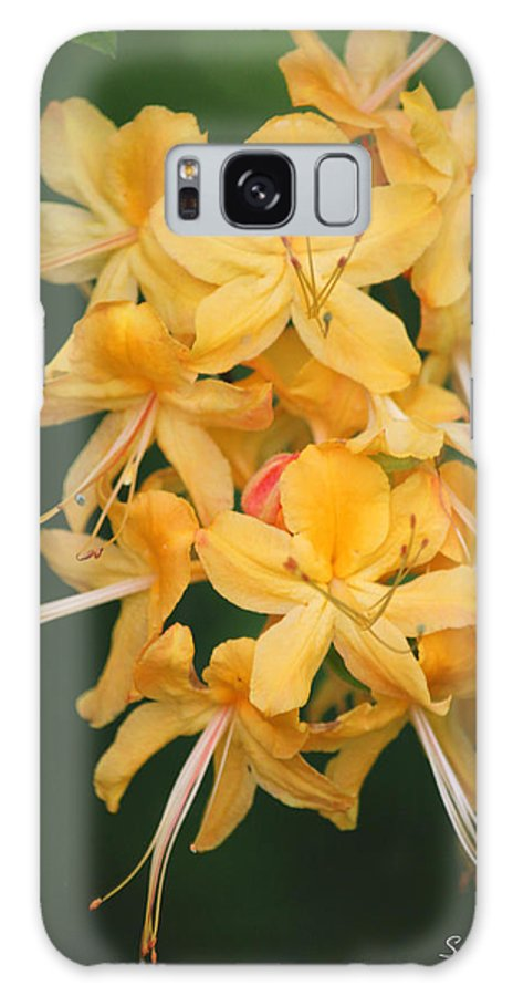 Flame Azalea Galaxy S8 Case featuring the photograph Flame Azalea by Suzanne Gaff