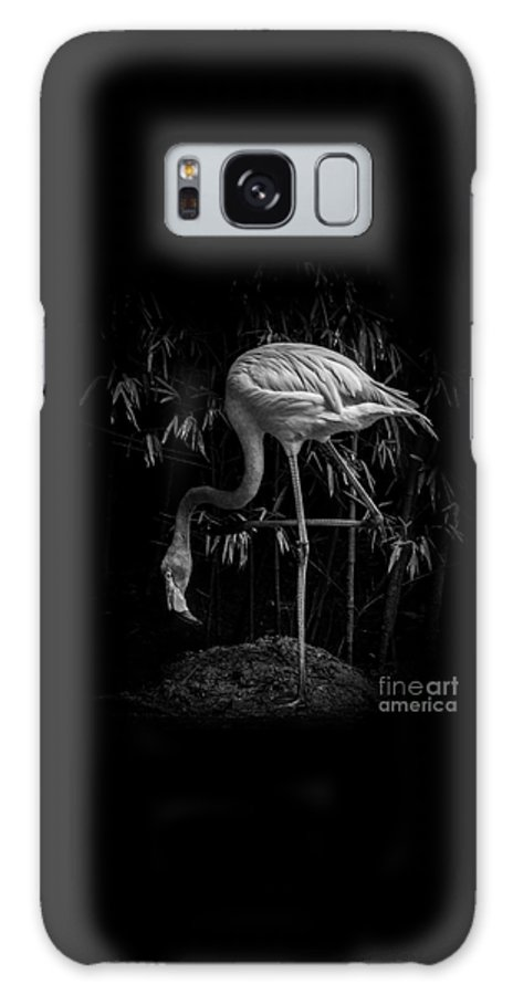 Flamingo Galaxy S8 Case featuring the photograph Flamingo Classic Bw by Toma Caul