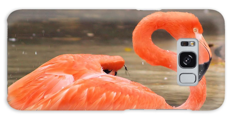 Flamingo Galaxy S8 Case featuring the photograph Flamingo by Gaby Swanson