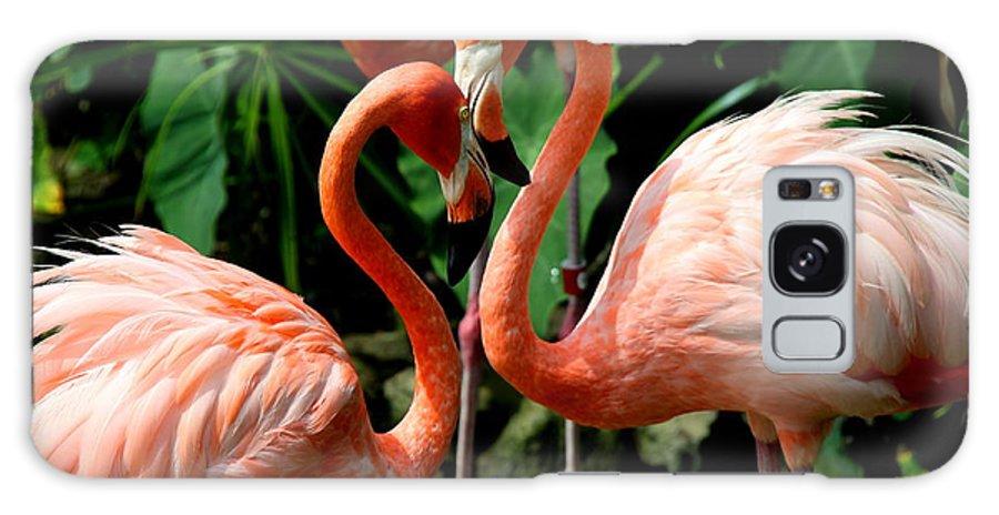 Pink Flamingo Galaxy S8 Case featuring the photograph Flamingo Heart by Barbara Bowen