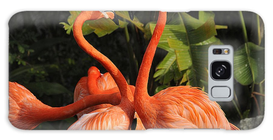 Flamingo Galaxy S8 Case featuring the photograph Flamingo Heart by Keith Lovejoy