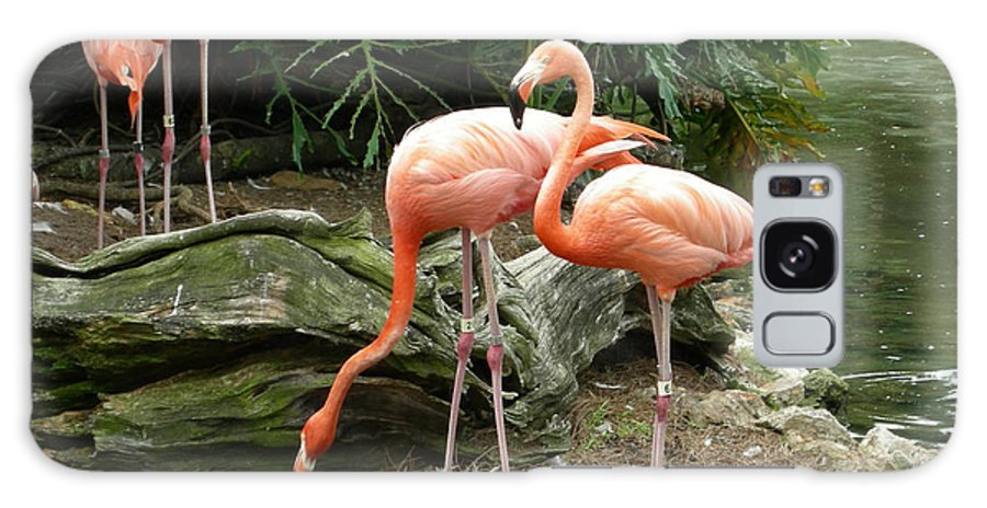 Flamingo Galaxy S8 Case featuring the photograph Flamingos by Carol Turner