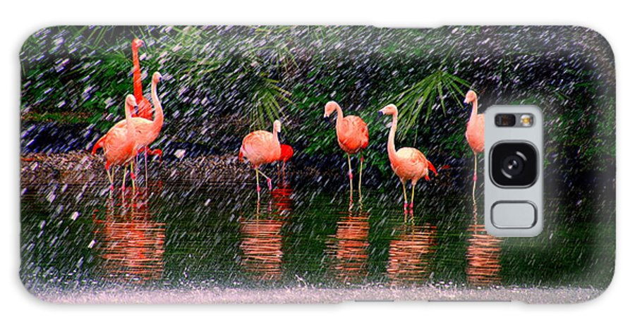 Flamingos Galaxy S8 Case featuring the photograph Flamingos II by Susanne Van Hulst