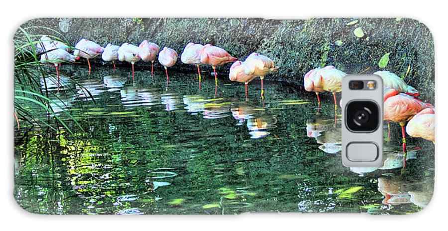 Flamingos Galaxy S8 Case featuring the photograph Flamingos by Nora Martinez
