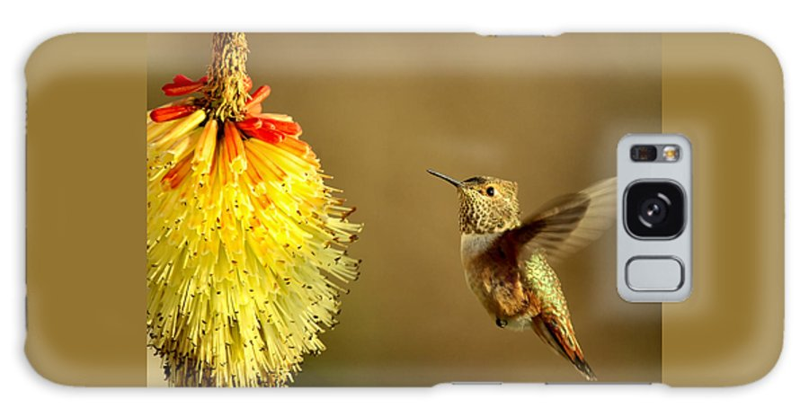 Hummingbird Galaxy S8 Case featuring the photograph Flight Of The Hummer by Mike Dawson