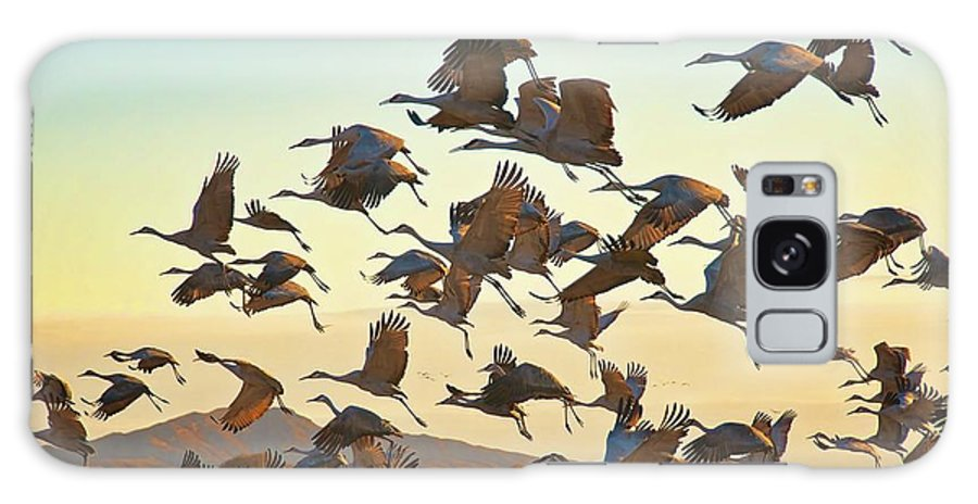 Nature Galaxy Case featuring the photograph Liftoff, Sandhill Cranes by Zayne Diamond Photographic