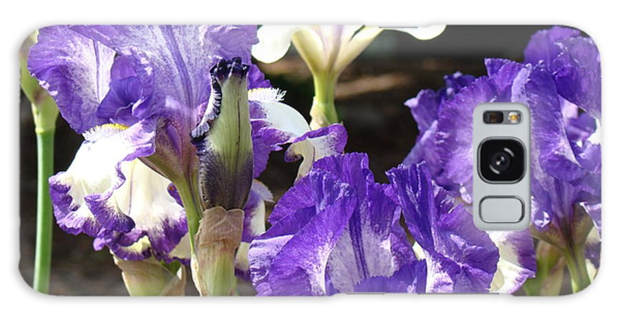 �irises Artwork� Galaxy S8 Case featuring the photograph Flora Bota Irises Purple White Iris Flowers 29 Iris Art Prints Baslee Troutman by Baslee Troutman