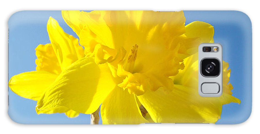 Spring Galaxy S8 Case featuring the photograph Floral Art Bright Yellow Daffodil Flowers Baslee Troutman by Baslee Troutman