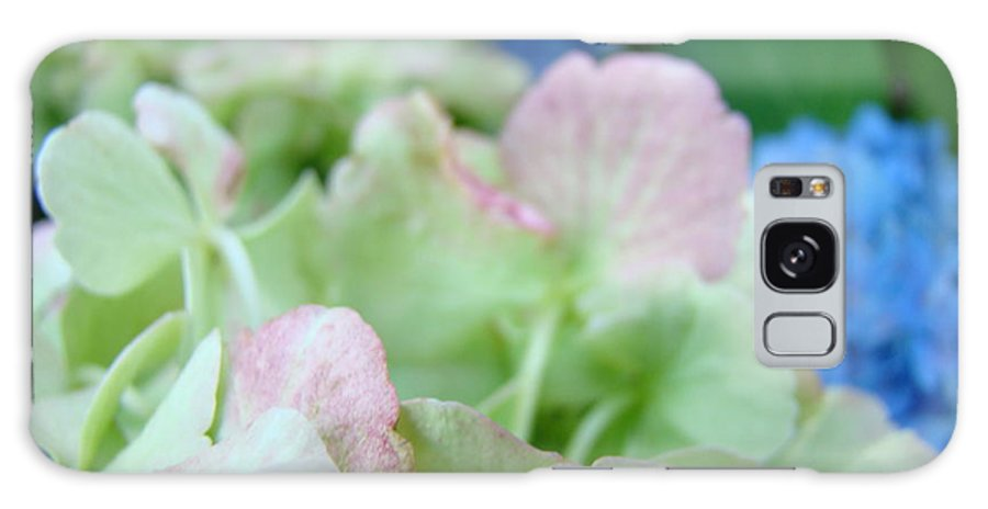 Hydrangea Galaxy S8 Case featuring the photograph Floral Artwork Hydrangea Flowers Soft Nature Giclee Baslee Troutman by Baslee Troutman