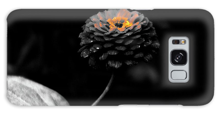 Zinnia Galaxy S8 Case featuring the photograph Floral October Zinnia End Of Season Sc 01 by Thomas Woolworth