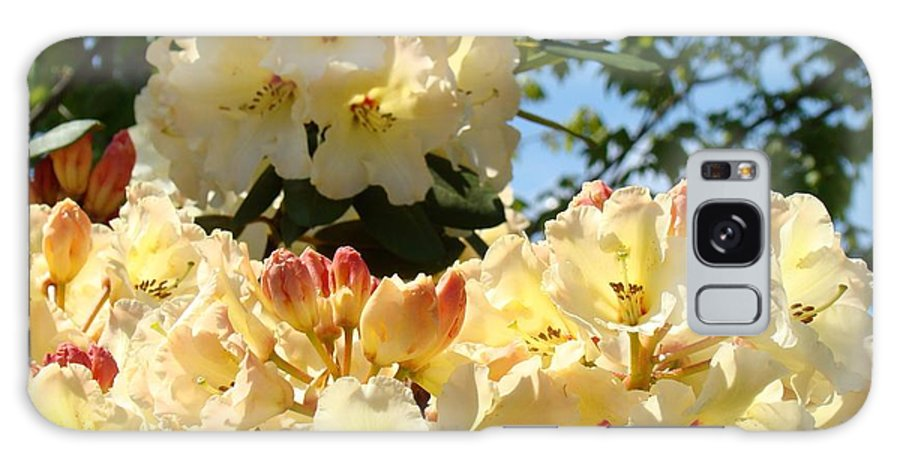 Rhodies Galaxy S8 Case featuring the photograph Floral Rhododendrons Fine Art Photography Art Prints Baslee Troutman by Baslee Troutman