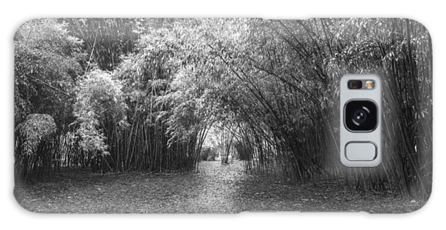 Garden Galaxy S8 Case featuring the photograph Florida Garden Scene_011 by Pat Canova