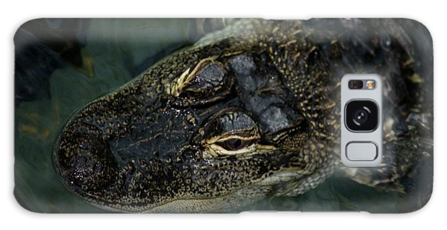 Alligator Galaxy S8 Case featuring the photograph Florida Gators by Michelli Rios-Allen