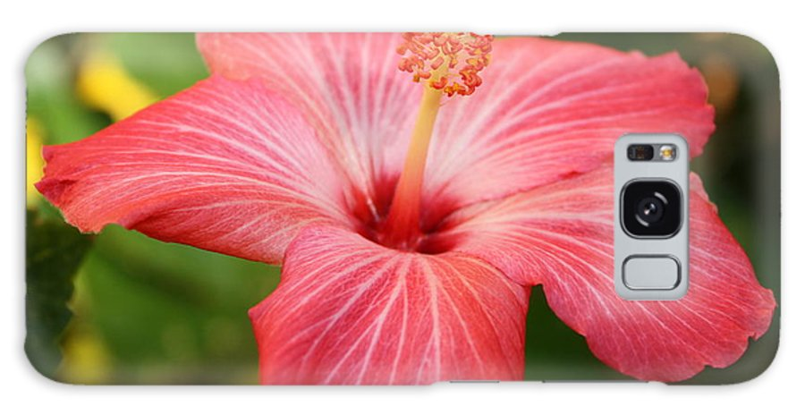 Pink Hibiscus Galaxy S8 Case featuring the photograph Florida Hibiscus by Carol Groenen