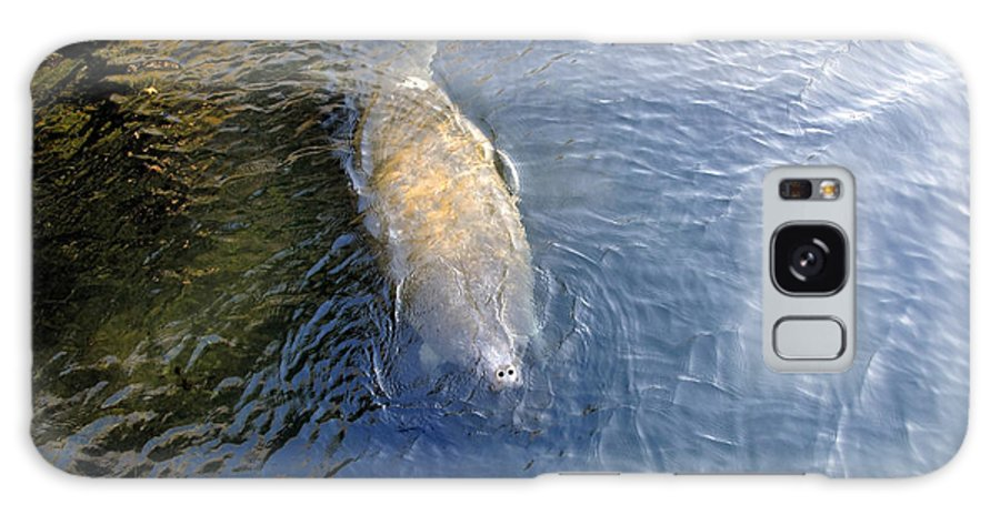 Manatee Galaxy S8 Case featuring the photograph Florida Manatee by David Lee Thompson