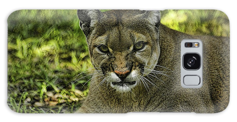 Panther Galaxy S8 Case featuring the photograph Florida Panther Agitated by Keith Lovejoy
