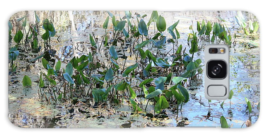 Florida Pond Galaxy S8 Case featuring the photograph Florida Pond by Carol Groenen