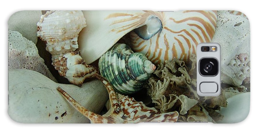 Shell Galaxy Case featuring the photograph Florida Sea Shells by Florene Welebny