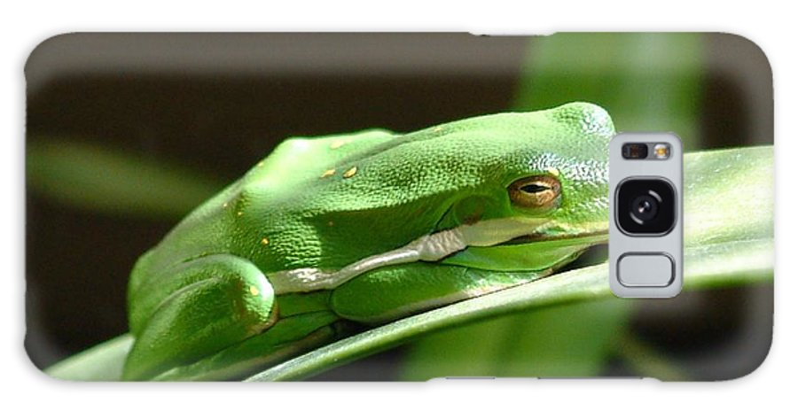 Frog Galaxy Case featuring the photograph Florida Tree Frog by Ned Stacey