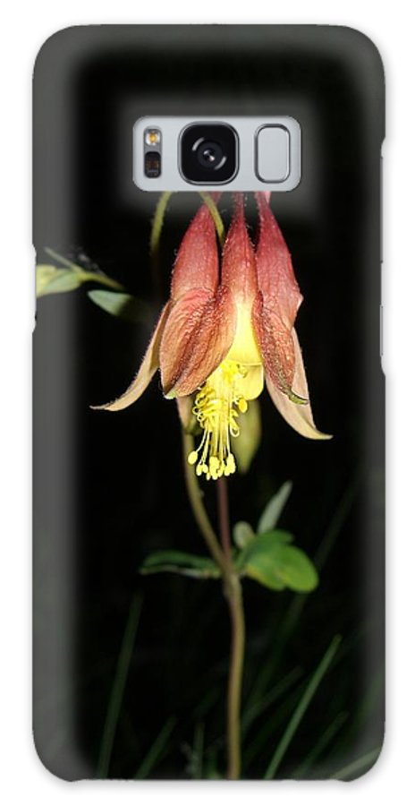 Flower Galaxy S8 Case featuring the photograph Flower by Amanda Kabat