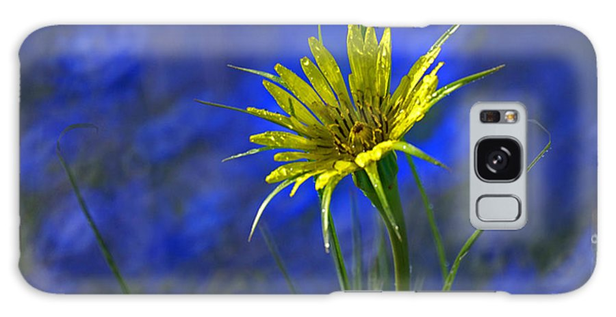 Flower Galaxy S8 Case featuring the photograph Flower And Flax by Heather Coen