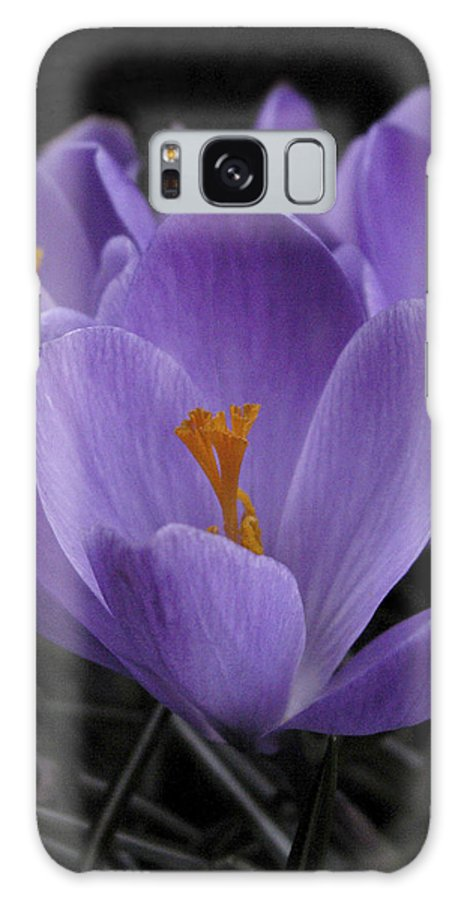 Flowers Galaxy S8 Case featuring the photograph Flower Crocus by Nancy Griswold