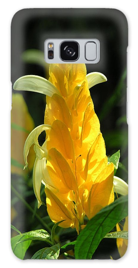 Flower Galaxy S8 Case featuring the photograph Flower by Diane Greco-Lesser