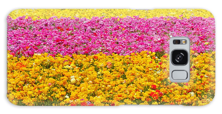 Flower Galaxy S8 Case featuring the photograph Flower Fields Carlsbad CA Giant Ranunculus by Christine Till