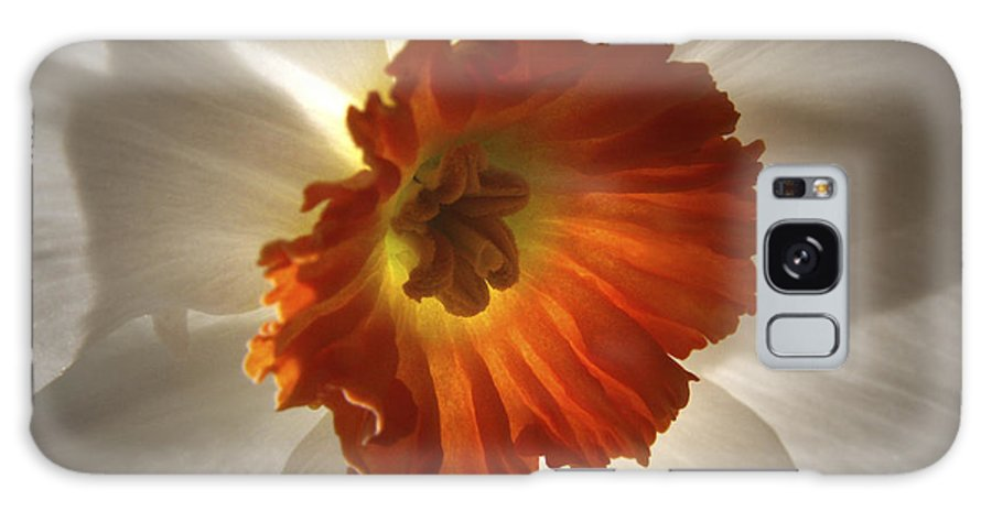 Flowers Galaxy Case featuring the photograph Flower Narcissus by Nancy Griswold
