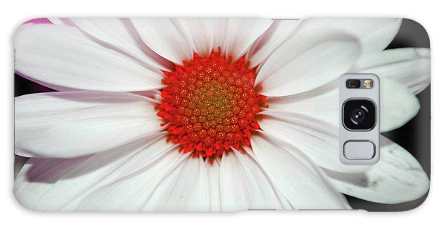 Teresa Blanton Galaxy S8 Case featuring the photograph Flower Power by Teresa Blanton