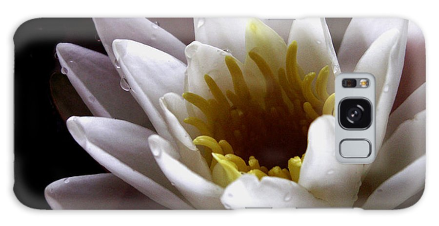 Flowers Galaxy S8 Case featuring the photograph Flower Waterlily by Nancy Griswold