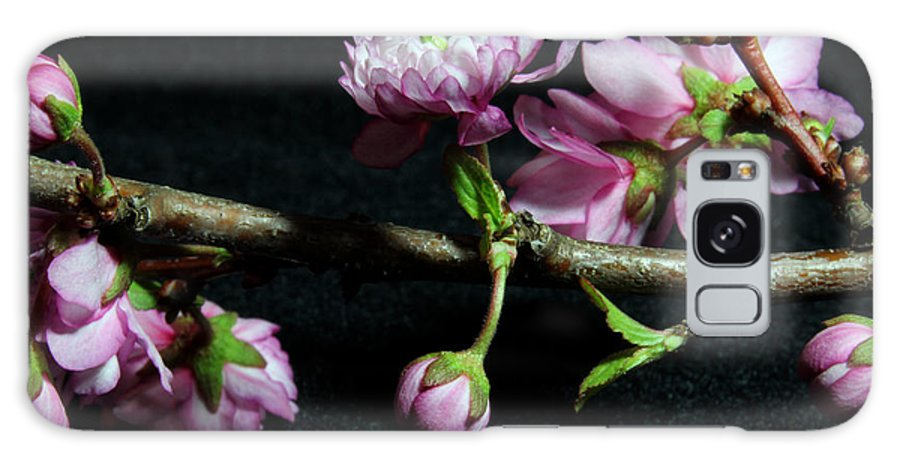 Nature Galaxy S8 Case featuring the photograph Flowering Almond 2011-16 by Robert Morin
