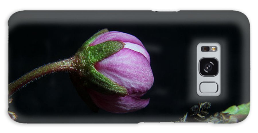 Nature Galaxy S8 Case featuring the photograph Flowering Almond 2011-20b by Robert Morin