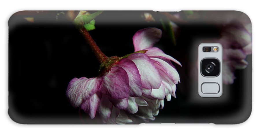 Nature Galaxy S8 Case featuring the photograph Flowering Almond 2011-21 by Robert Morin