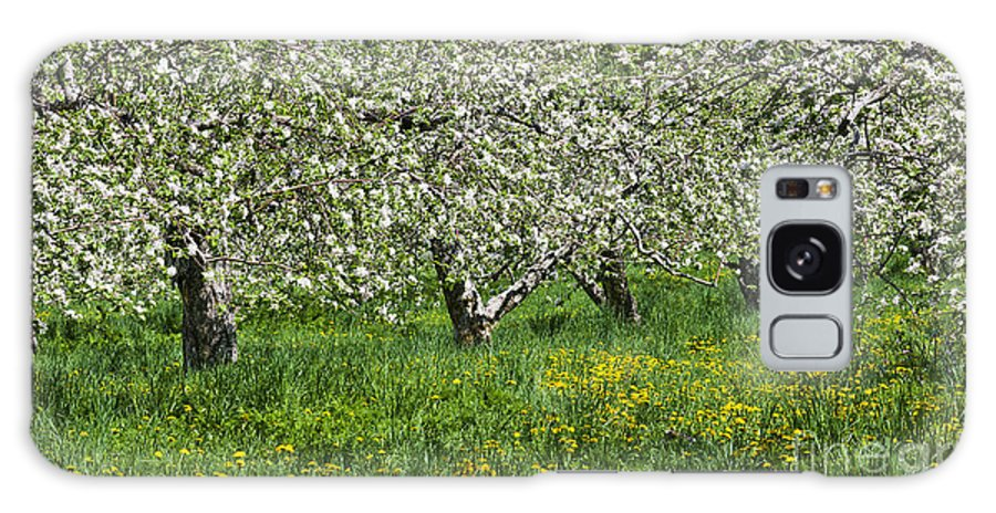 Spring Galaxy S8 Case featuring the photograph Flowering Apple Orchard by Alan L Graham