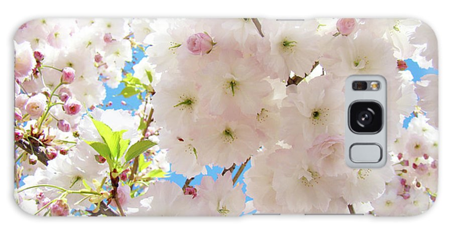 Blossom Galaxy S8 Case featuring the photograph Fluffy White Pink Sunlit Tree Blossom Art Print Canvas Baslee Troutman by Baslee Troutman