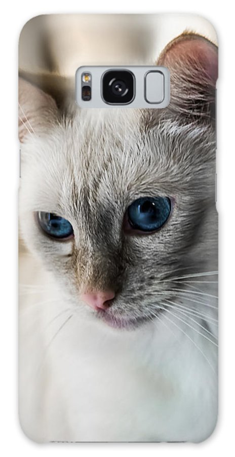 Cat Galaxy S8 Case featuring the photograph Focused by DeWayne Beard