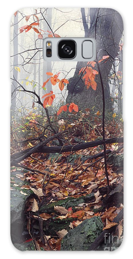 Usa Galaxy S8 Case featuring the photograph Foggy Fall Woodland Morning by Thomas R Fletcher