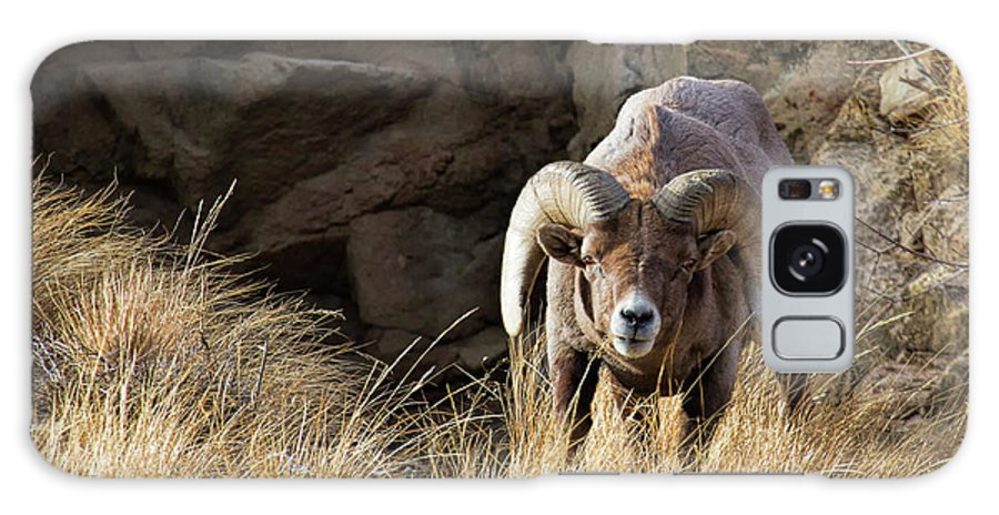 Bighorn Sheep Galaxy S8 Case featuring the photograph Follow Your Dream by Jim Garrison