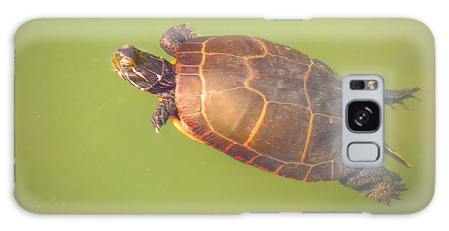 Turtle Galaxy S8 Case featuring the photograph Following The Light by Rosalie Scanlon