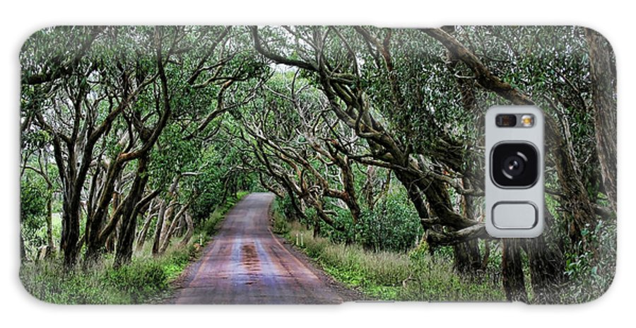 Trees Galaxy S8 Case featuring the photograph Forest Corridor by Douglas Barnard
