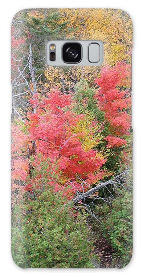 Fall Galaxy Case featuring the photograph Forest Fire by Kelly Mezzapelle
