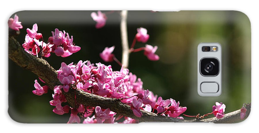 Flower Galaxy S8 Case featuring the photograph Forest Pansy Redbud Branch In May by Anna Lisa Yoder
