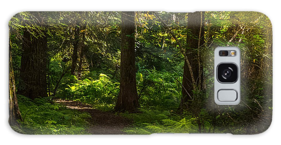 Roosevelt Grove Galaxy S8 Case featuring the photograph Forest Path by Yeates Photography