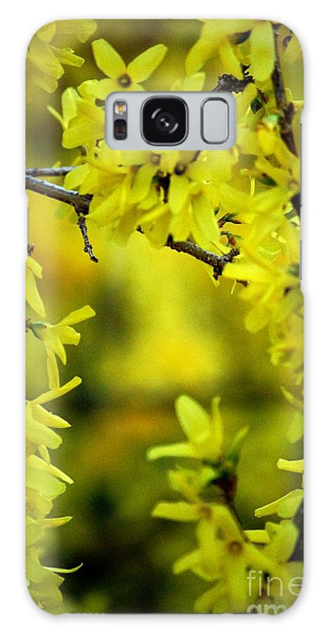 Spring Galaxy Case featuring the photograph Forsythia At The Hacienda by David Lane