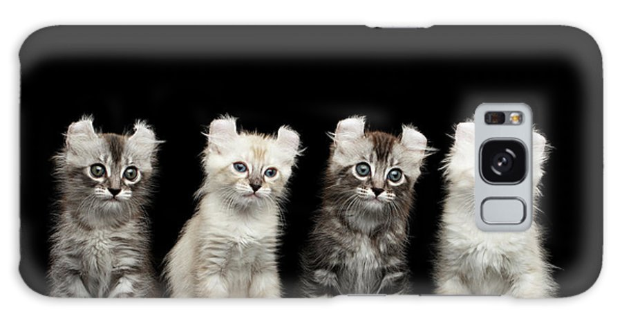 Curl Galaxy S8 Case featuring the photograph Four American Curl Kittens With Twisted Ears Isolated Black Background by Sergey Taran