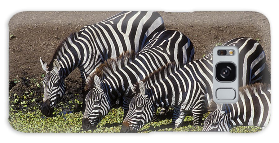 Zebra Galaxy S8 Case featuring the photograph Four For Lunch - Zebras by Sandra Bronstein