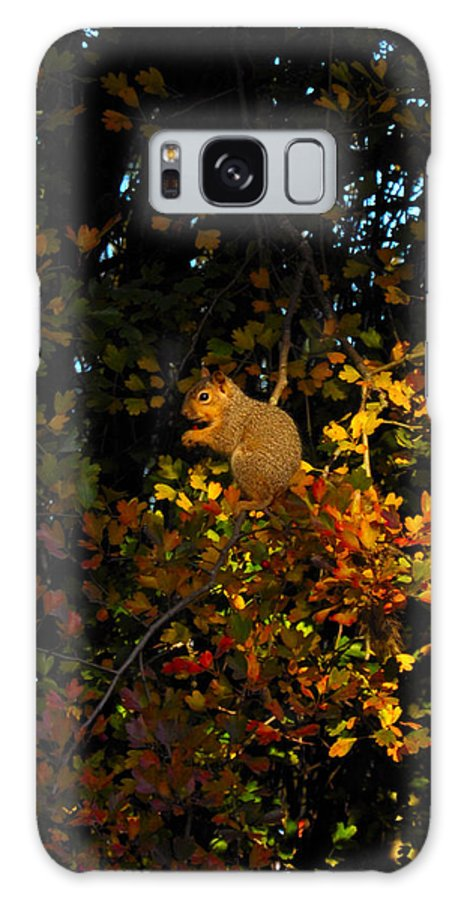 Squirrels Galaxy S8 Case featuring the photograph Fox Squirrel by Noah Cole